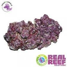 Real Reef